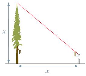 Height measurements | BC BigTree Website
